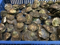 bezoek aan de oesterput