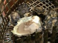 Foto impressie bezoek oesterput Oostende_4